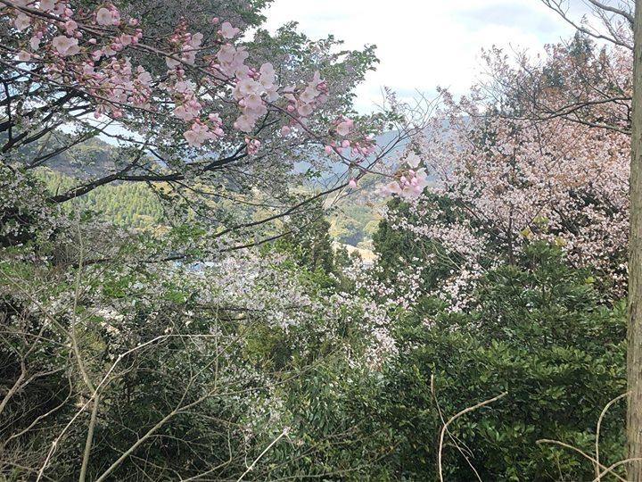 楽養の里にも春が訪れました🌸